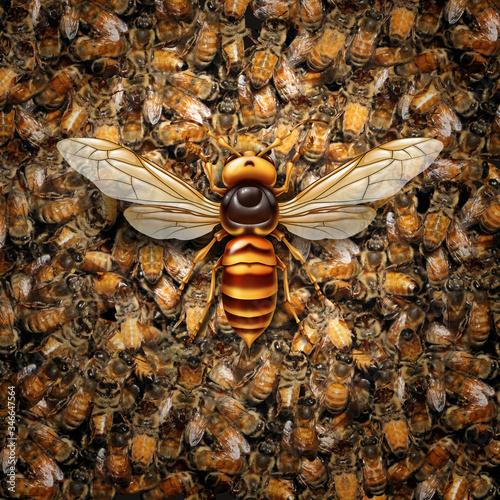 Giant Hornet Predator Attacking Bees Wallpaper Mural