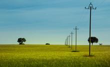 Power Lines On Green Field