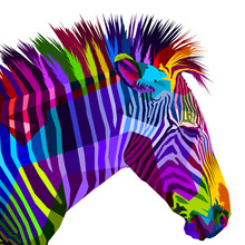 Colorful Zebra Isolated On Whi...
