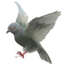 Dove Pigeon Bird,flapping Wing...