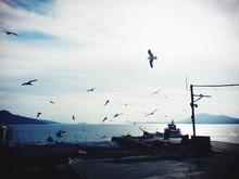 Seagulls Flying Over Pier Against Sky
