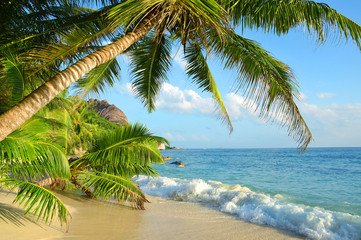 Fototapeta Popularne Coconut palms on sand beach Anse Source d'Argent in La Digue Island, Seychelles.