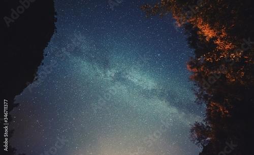 Obraz na płótnie Low Angle View Of Trees Against Sky With Star Field
