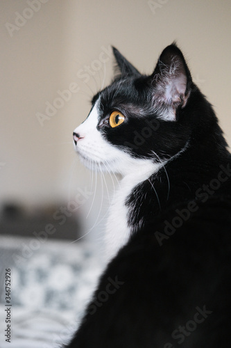 Funny black and white tuxedo cat is sitting on the windowsill and looking out the window, boredom, comfort, drowsiness Canvas Print
