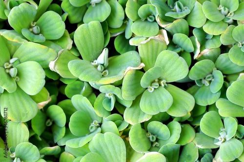 Fototapety, obrazy: Full Frame Shot Of Green Plants