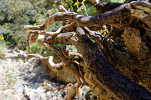 Close-up Of Lizard On Tree Trunk In Forest