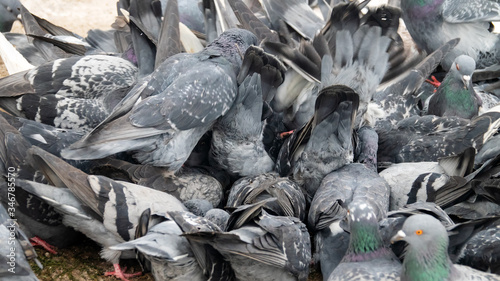 Bustle hustle and bustle among city pigeons Canvas Print