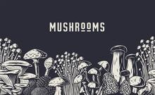 Autumn Forest Mushroom Picking...