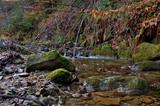 Fototapeta Kamienie - Omszały kamień w potoku.