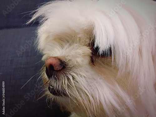 Close-up Of Dog Indoors Canvas Print