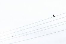 Two Birds Sitting On Electric ...