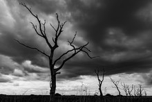 Scary Black And White Trees Sp...