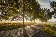 Idyllic Country Road At Sunset In Germany
