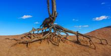 Dead Tree On Desert Against Blue Sky