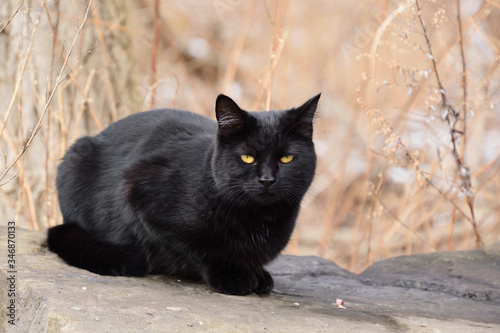black cat on a rock