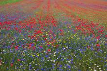 Full Frame Shot Of Multi Colored Flowering Plants On Field