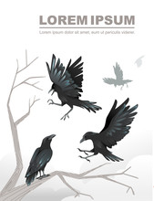 Group Of Black Crows A Dead Tree Branch Advertising Flyer Design Cartoon Animal Style Flat Vector Illustration On White Background