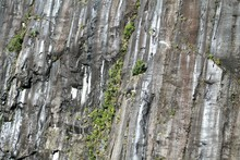 Full Frame Shot Of Rock Face With Green Plants