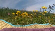 Yellow Wildflowers Growing In Field