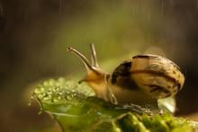 Macro Photo Of A Snail Sitting...