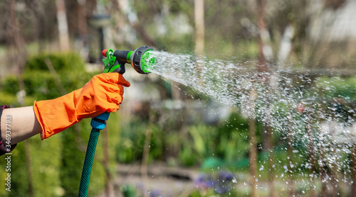Watering the garden, gardener using hose pipe with spray head. Wallpaper Mural