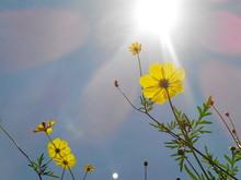 Yellow Flowers Blooming Against Sky
