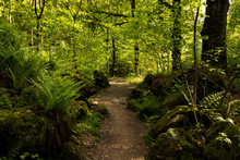 A Woodland Path Around Derwent...