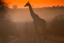 South Africa, Silhouette Of No...
