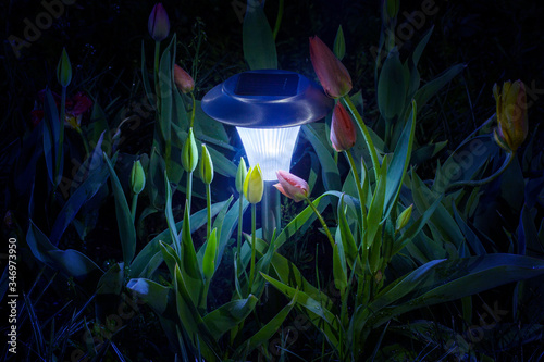 Delicate tulip buds hug a solar panel flashlight at night Fototapete