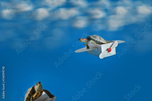 Fotografie, Obraz A small turtle is flying on a paper plane and the second one is waiting below