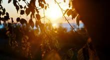 Close-up Of Sun Shining Throug...