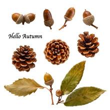 Hello Autumn   ドングリ 松ぼっくり 秋 切り抜き素材