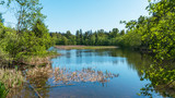reeds in peaceful park lake - spring