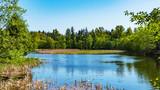pond in park - BC spring