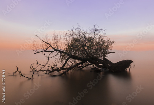 Fototapety, obrazy: Silhouette Bare Tree On Sea Against Sky During Sunset