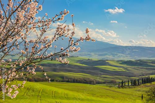 Foto Cherry Tree On Field Against Blue Sky