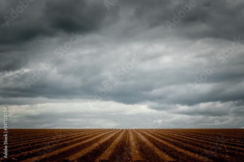 Furrowed ploughed potato field receding to vanishing point amid a stormy sky Tapéta, Fotótapéta