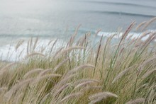 Close-up Of Grass On Sand At Beach