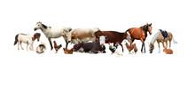 Collage Of Different Farm Anim...