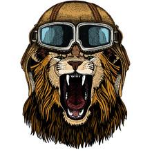 Lion. Wild Animal Portrait. Fa...