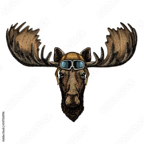 Obraz na plátne Moose head
