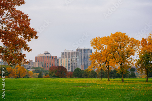 Trees On Field Against Sky During Autumn Wallpaper Mural