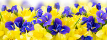 Bouquet Of Daffodil And Iris F...