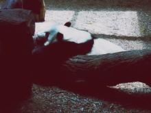 High Angle View Of Panda Resti...