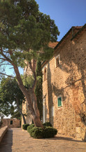 Picturesque Facade Of A House With A Huge Pine Tree, Majorca (Mallorca), Spain.