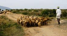 Flocks On Sheep And Shepherds ...