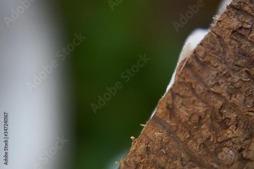 Obraz Tekstura kokosa, zbliżenie i piękne kolory. Makro oświetlonego kokosa. - fototapety do salonu
