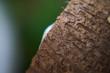 Tekstura kokosa, zbliżenie i piękne kolory. Makro oświetlonego kokosa.