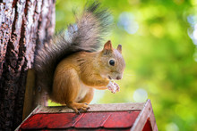 Close-up Of Squirrel On Birdho...
