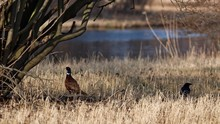 Birds On Dry Grassy Field